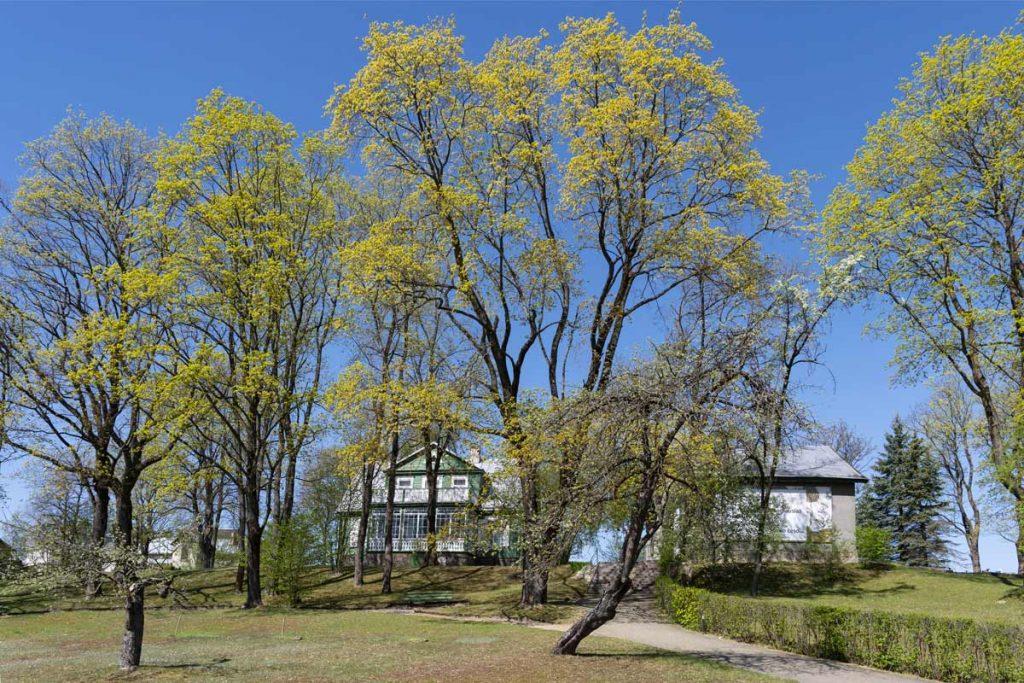 Baranausko klėtelė tarp medžių